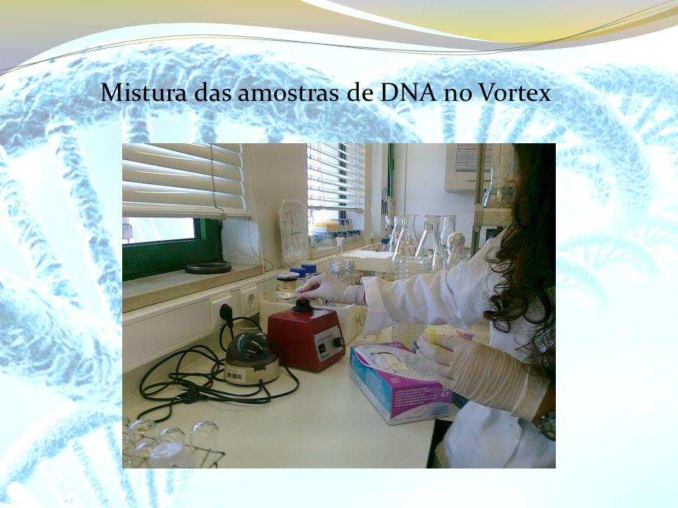 Mistura das amostras de DNA no Vortex