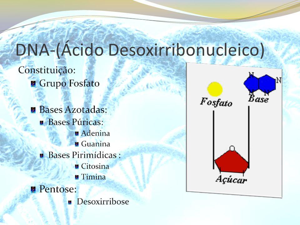 DNA-(Ácido Desoxirribonucleico)