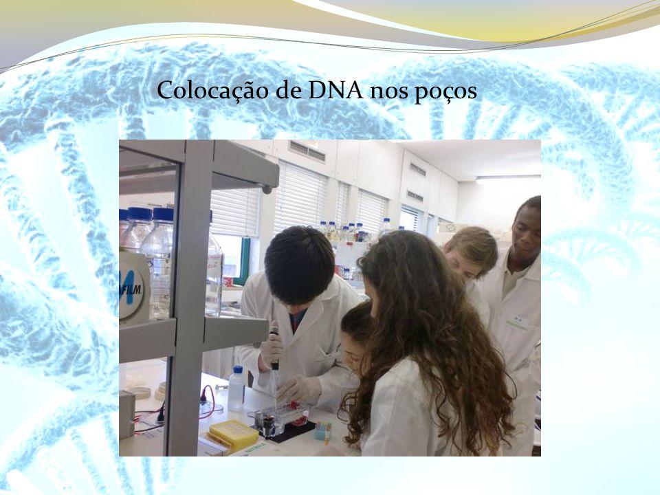 Colocação de DNA nos poços