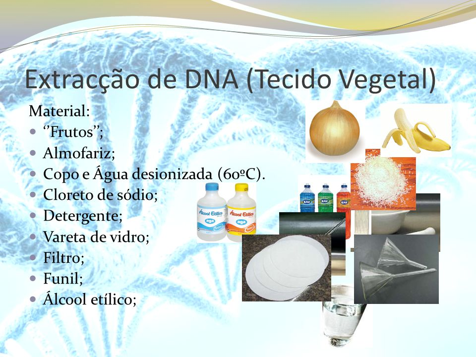 Extracção de DNA (Tecido Vegetal) Material: Frutos; Almofariz; Copo e Água desionizada (60ºC). Cloreto de sódio; Detergente; Vareta de vidro; Filtro;