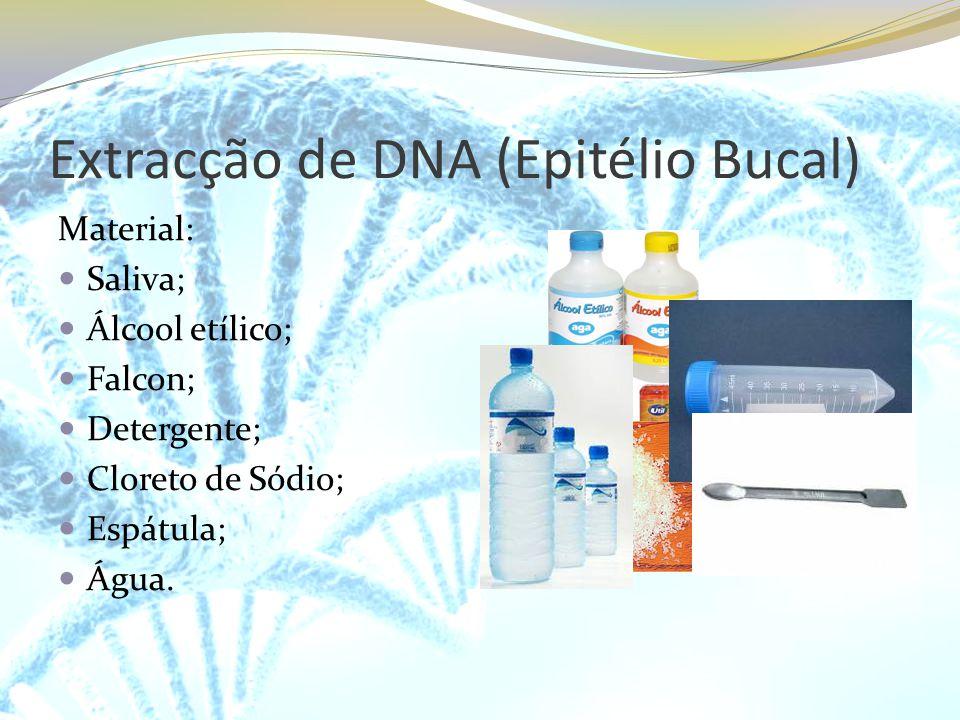 Extracção de DNA (Epitélio Bucal) Material: Saliva; Álcool etílico; Falcon; Detergente; Cloreto de Sódio; Espátula; Água.