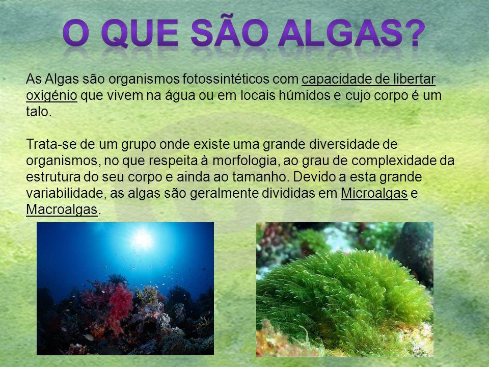 As Algas são organismos fotossintéticos com capacidade de libertar oxigénio que vivem na água ou em locais húmidos e cujo corpo é um talo. Trata-se de