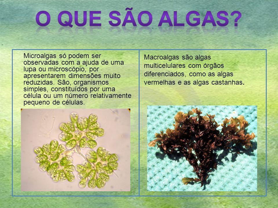 Microalgas só podem ser observadas com a ajuda de uma lupa ou microscópio, por apresentarem dimensões muito reduzidas. São, organismos simples, consti
