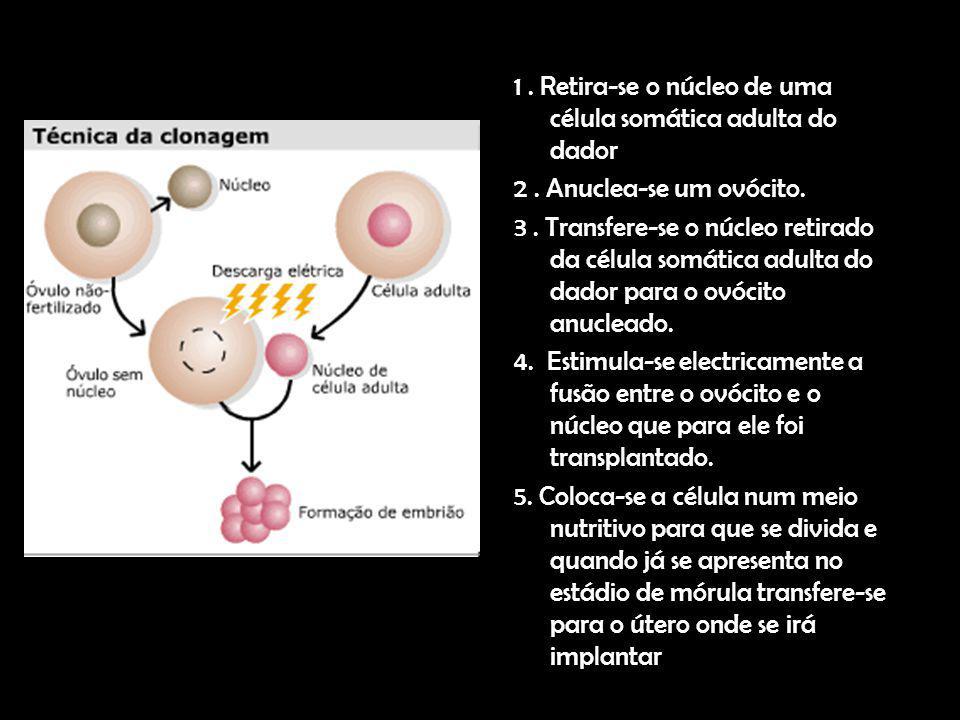 1. Retira-se o núcleo de uma célula somática adulta do dador 2. Anuclea-se um ovócito. 3. Transfere-se o núcleo retirado da célula somática adulta do