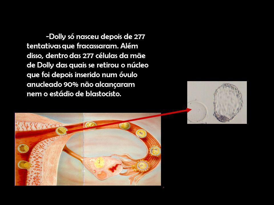 -Dolly só nasceu depois de 277 tentativas que fracassaram. Além disso, dentro das 277 células da mãe de Dolly das quais se retirou o núcleo que foi de