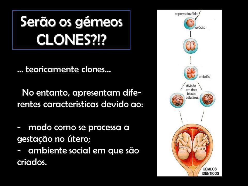 Serão os gémeos CLONES?!?... teoricamente clones... No entanto, apresentam dife- rentes características devido ao: - modo como se processa a gestação
