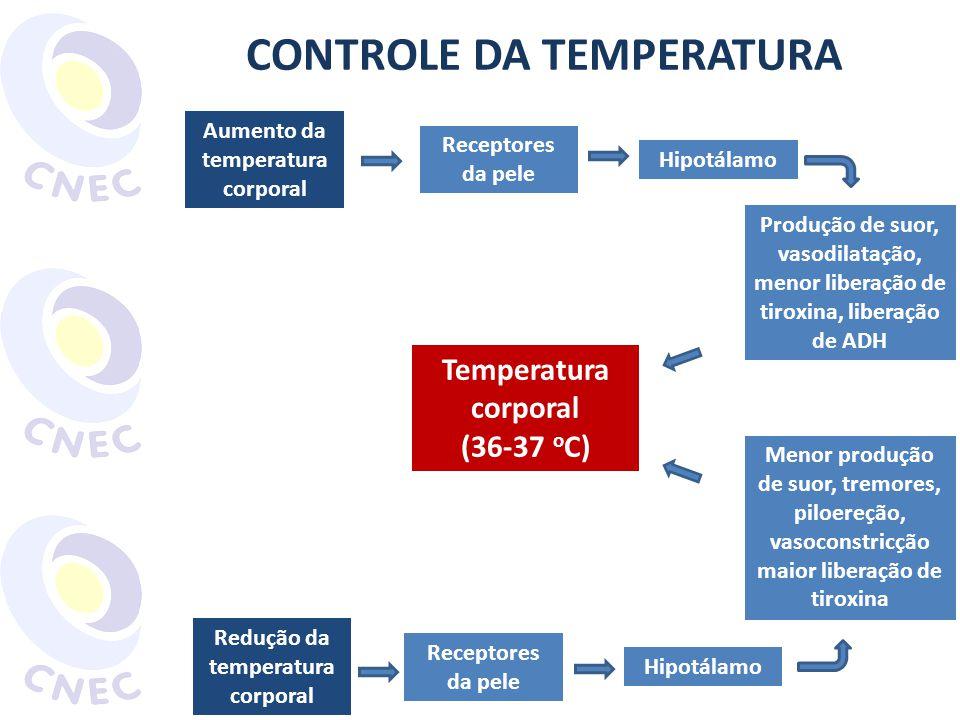 Aumento da temperatura corporal Receptores da pele Hipotálamo CONTROLE DA TEMPERATURA Produção de suor, vasodilatação, menor liberação de tiroxina, li