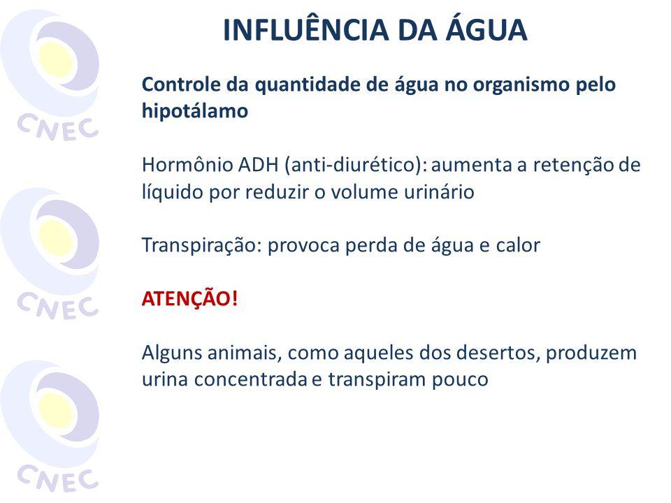 INFLUÊNCIA DA ÁGUA Controle da quantidade de água no organismo pelo hipotálamo Hormônio ADH (anti-diurético): aumenta a retenção de líquido por reduzi