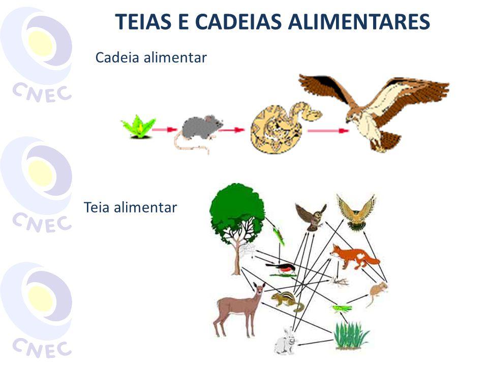TEIAS E CADEIAS ALIMENTARES Cadeia alimentar Teia alimentar