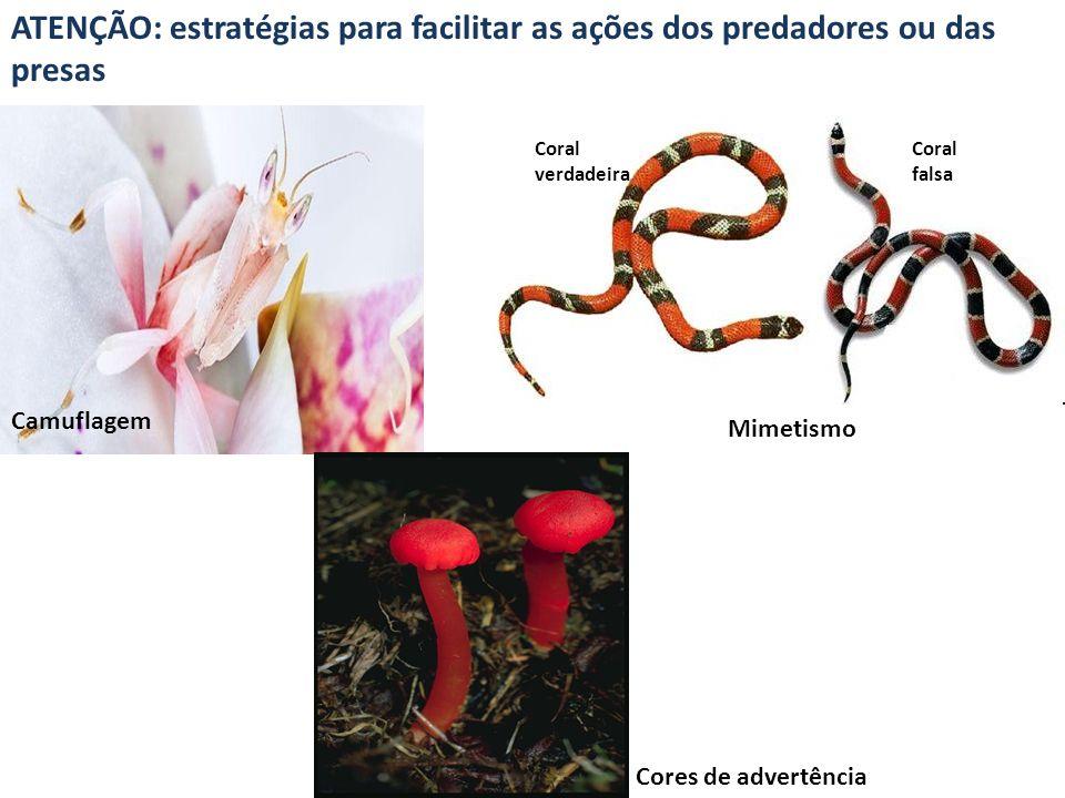 ATENÇÃO: estratégias para facilitar as ações dos predadores ou das presas Camuflagem Mimetismo Cores de advertência Coral verdadeira Coral falsa