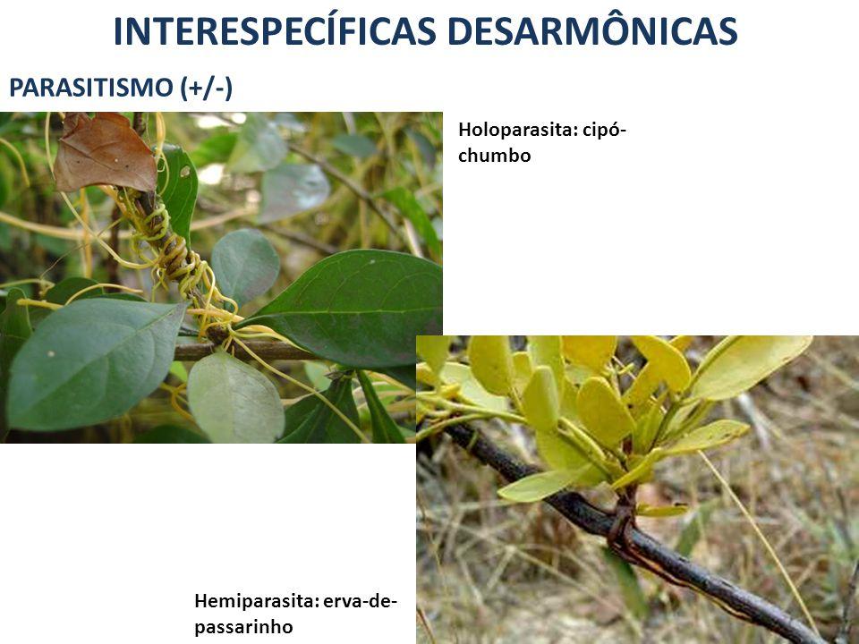 INTERESPECÍFICAS DESARMÔNICAS PARASITISMO (+/-) Holoparasita: cipó- chumbo Hemiparasita: erva-de- passarinho