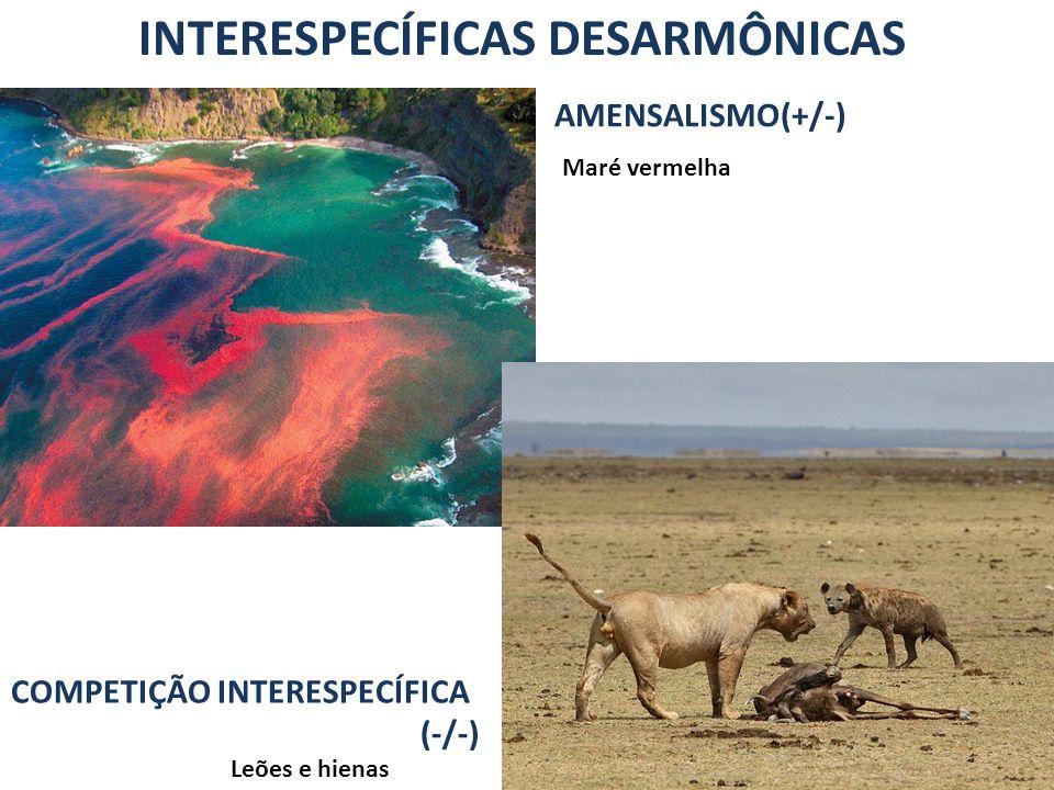 INTERESPECÍFICAS DESARMÔNICAS COMPETIÇÃO INTERESPECÍFICA (-/-) Leões e hienas Maré vermelha AMENSALISMO(+/-)