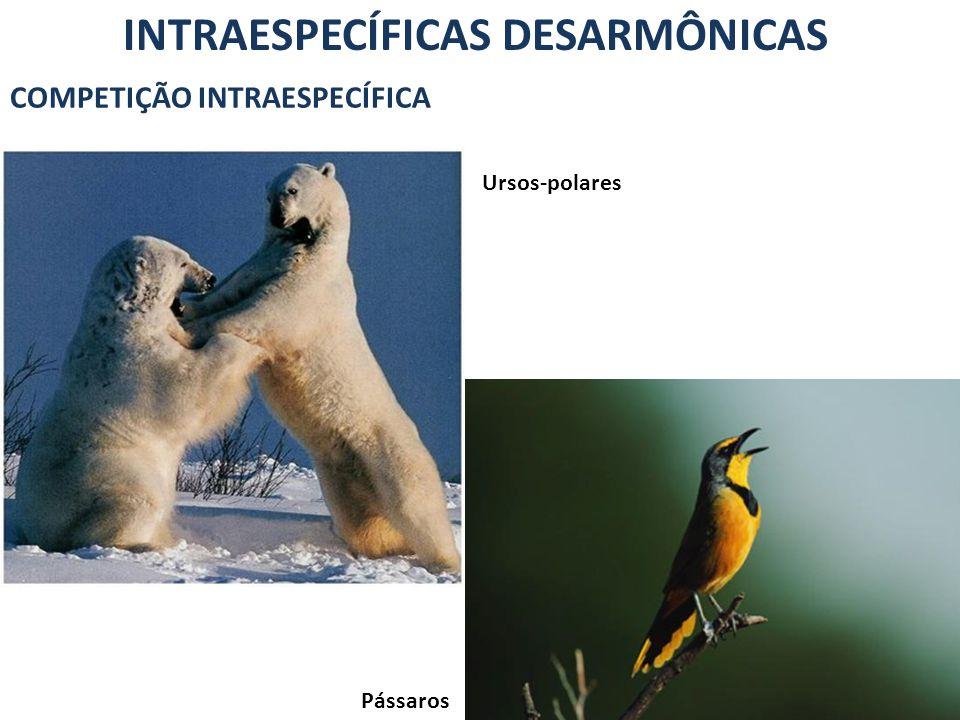 INTRAESPECÍFICAS DESARMÔNICAS COMPETIÇÃO INTRAESPECÍFICA Pássaros Ursos-polares