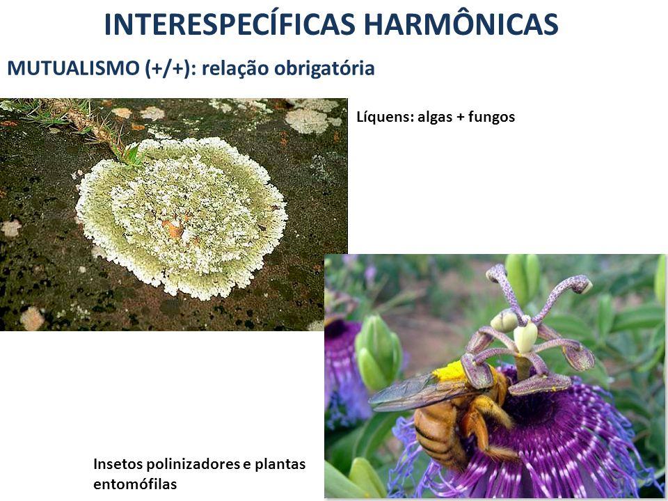 INTERESPECÍFICAS HARMÔNICAS MUTUALISMO (+/+): relação obrigatória Líquens: algas + fungos Insetos polinizadores e plantas entomófilas