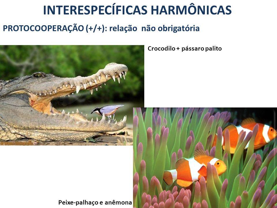 INTERESPECÍFICAS HARMÔNICAS PROTOCOOPERAÇÃO (+/+): relação não obrigatória Crocodilo + pássaro palito Peixe-palhaço e anêmona