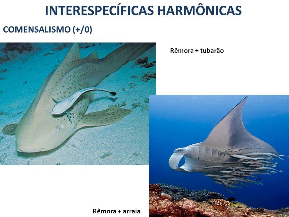 INTERESPECÍFICAS HARMÔNICAS INQUILINISMO (+/0) Caranguejo-ermitão + concha de moluscos Orquídea + árvores EPIFITISMO (+/0)