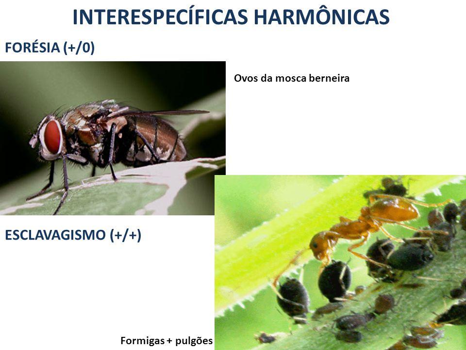 INTERESPECÍFICAS HARMÔNICAS FORÉSIA (+/0) Ovos da mosca berneira ESCLAVAGISMO (+/+) Formigas + pulgões