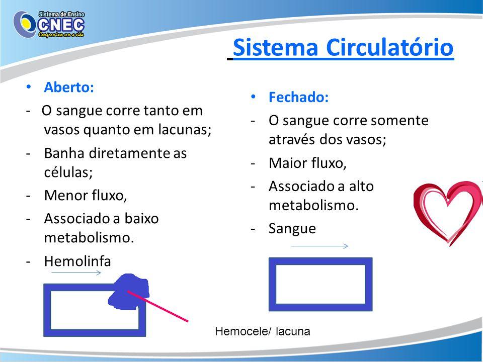 Sistema Circulatório Aberto: - O sangue corre tanto em vasos quanto em lacunas; -Banha diretamente as células; -Menor fluxo, -Associado a baixo metabo