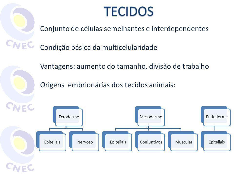 Funções: revestimento interno e externo e secreção Origens: ectoderme, endoderme ou mesoderme Características: células justapostas, pouca substância intercelular, avascularizado Células dotadas de especializações Microvilosidades Zônulas de oclusão Zônulas de adesão Desmossomos Gap Citoesqueleto Hemidesmossomos Lâmina basal AMABIS, J.