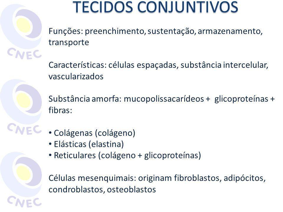 Funções: preenchimento, sustentação, armazenamento, transporte Características: células espaçadas, substância intercelular, vascularizados Substância