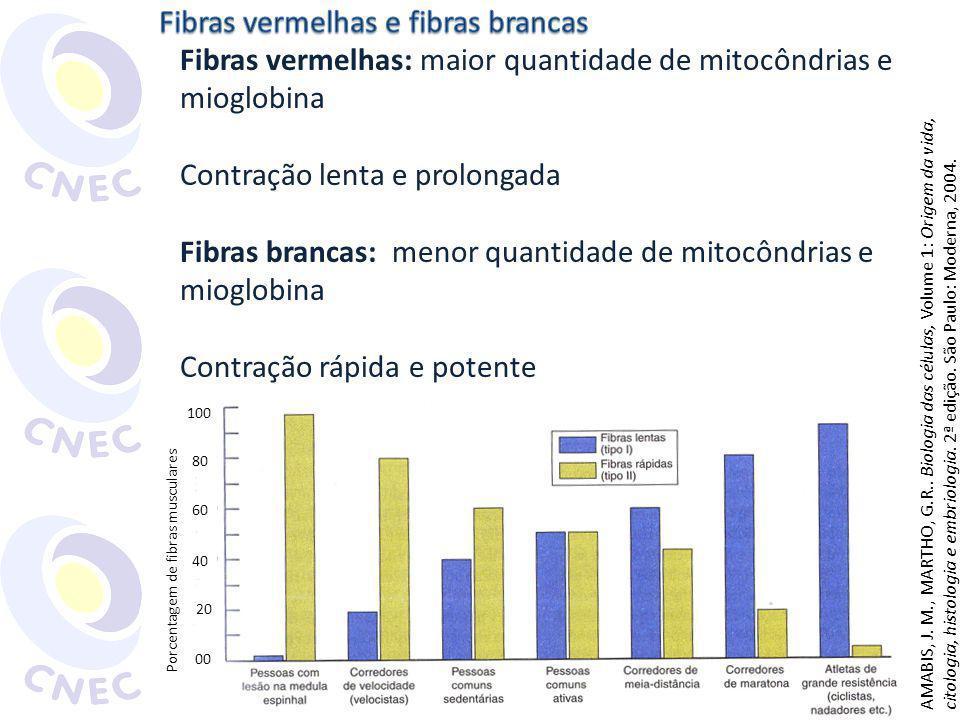 Fibras vermelhas: maior quantidade de mitocôndrias e mioglobina Contração lenta e prolongada Fibras brancas: menor quantidade de mitocôndrias e mioglo