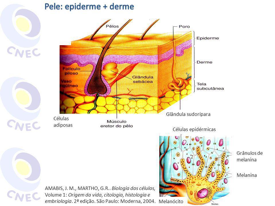 Células adiposas Glândula sudorípara Células epidérmicas Grânulos de melanina Melanina Melanócito AMABIS, J. M., MARTHO, G.R.. Biologia das células, V