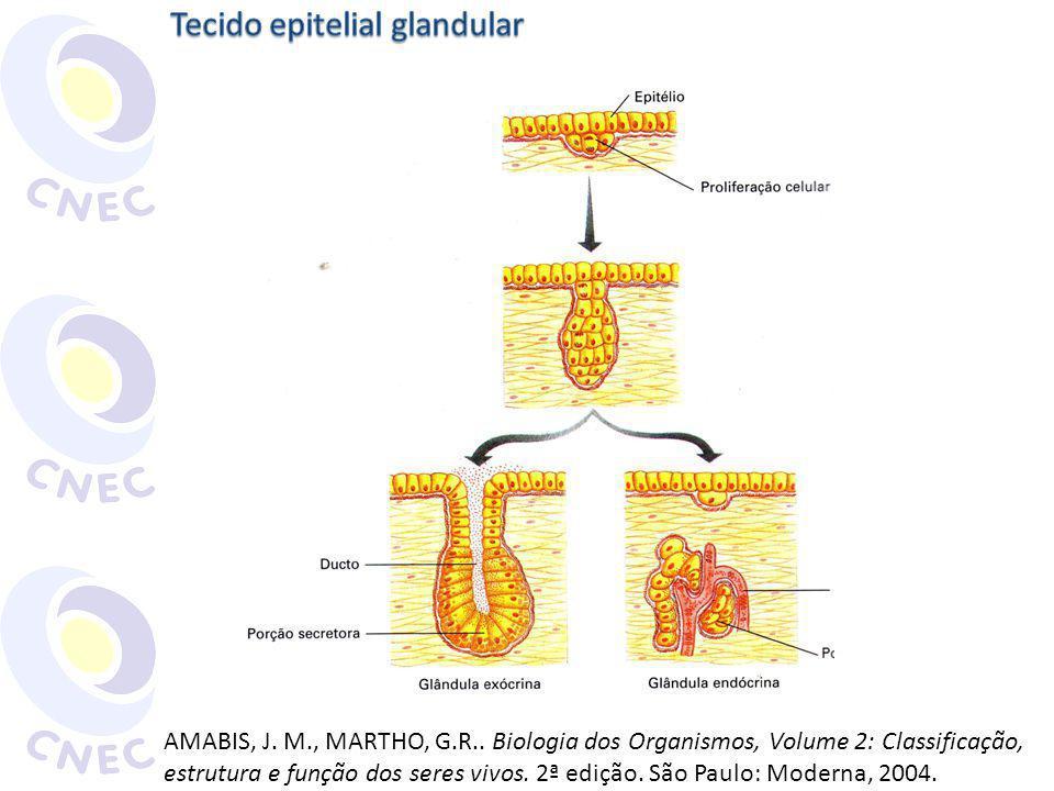 Classificação de acordo com a porção secretora Tubulosa Acinosa Túbulo-acinosa http://www.teliga.net/2010/11/tecido-glandular-ou-secretor- principais.html Acesso em 14 maio 2011