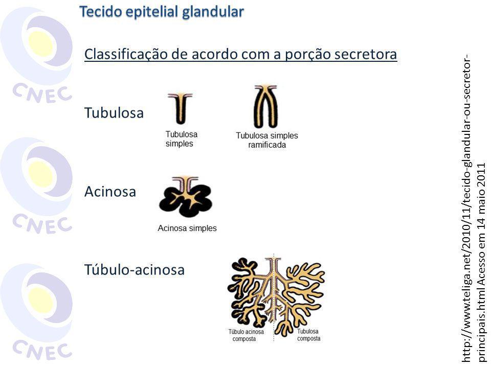 Classificação de acordo com o modo de secreção Holócrinas: sebáceas Apócrinas: mamárias Merócrinas: salivares Classificação de acordo com o tipo de secreção Mucosas: caliciformes (intestino delgado) Serosas: secretoras de enzimas (estômago e intestino) Mucoserosas: submandibulares
