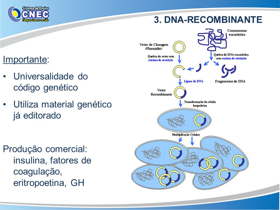3. DNA-RECOMBINANTE Importante: Universalidade do código genético Utiliza material genético já editorado Produção comercial: insulina, fatores de coag