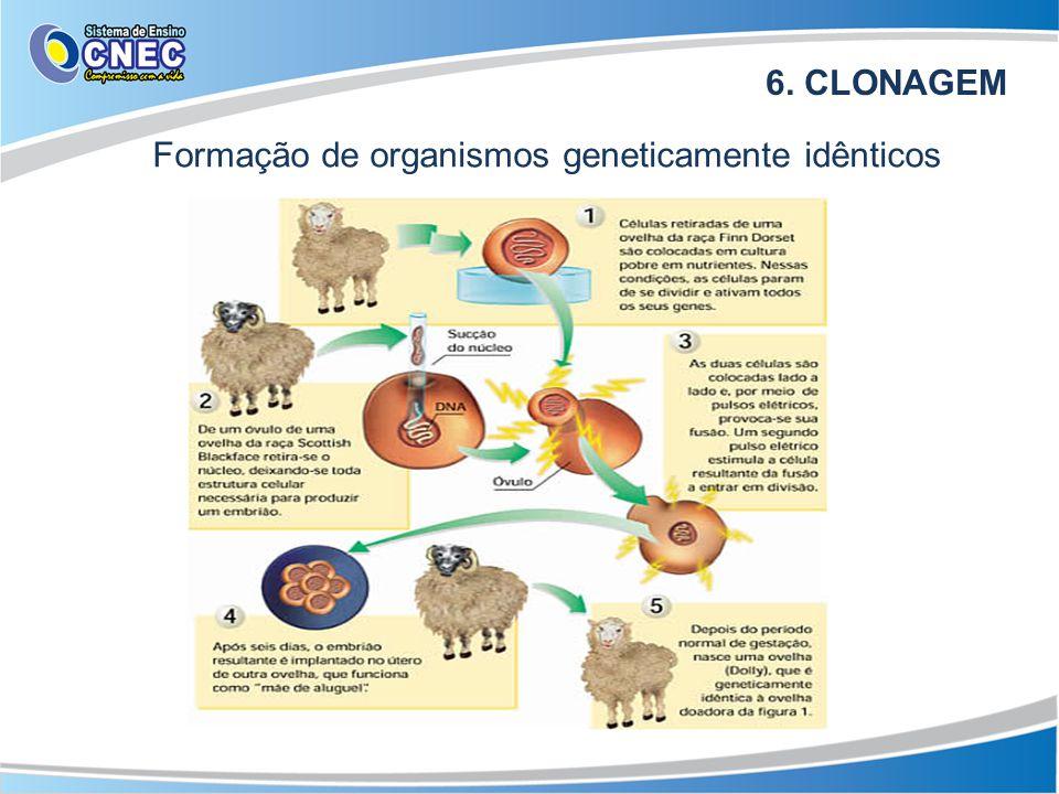 6. CLONAGEM Formação de organismos geneticamente idênticos