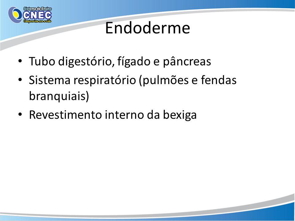 Endoderme Tubo digestório, fígado e pâncreas Sistema respiratório (pulmões e fendas branquiais) Revestimento interno da bexiga