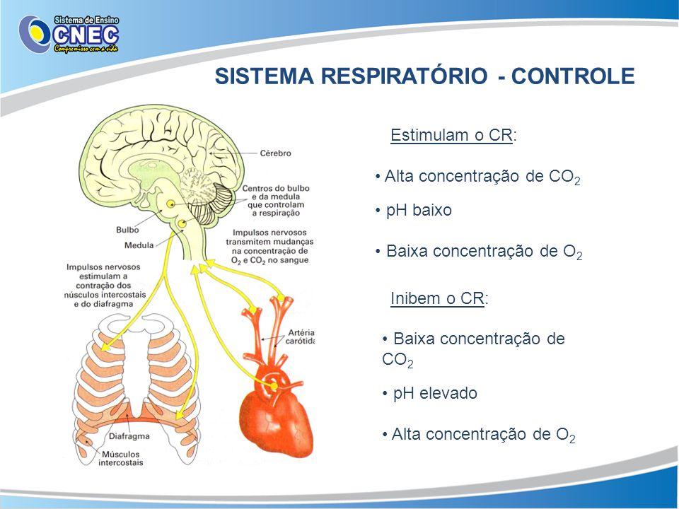 SISTEMA RESPIRATÓRIO - CONTROLE Estimulam o CR: Alta concentração de CO 2 pH baixo Baixa concentração de O 2 Inibem o CR: Baixa concentração de CO 2 p