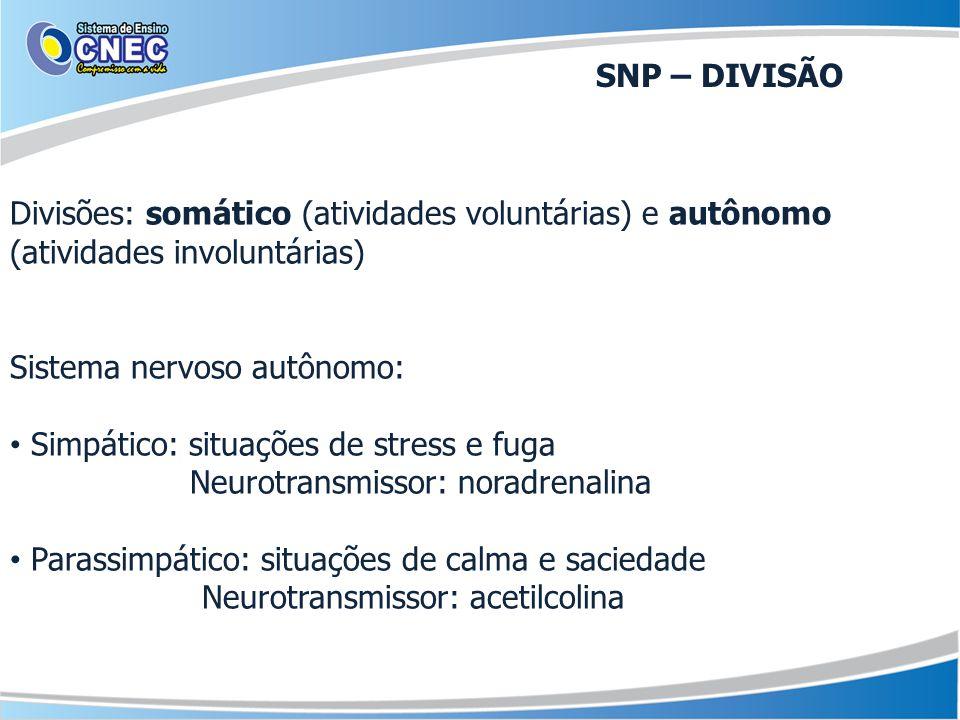 SNP – DIVISÃO Divisões: somático (atividades voluntárias) e autônomo (atividades involuntárias) Sistema nervoso autônomo: Simpático: situações de stre