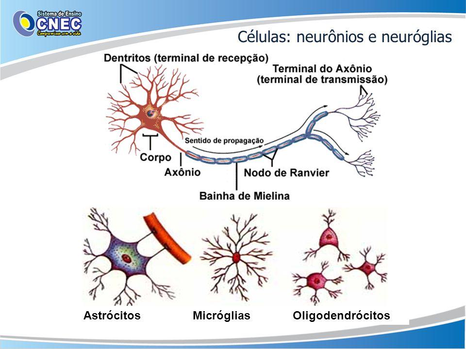 Células: neurônios e neuróglias Astrócitos Micróglias Oligodendrócitos