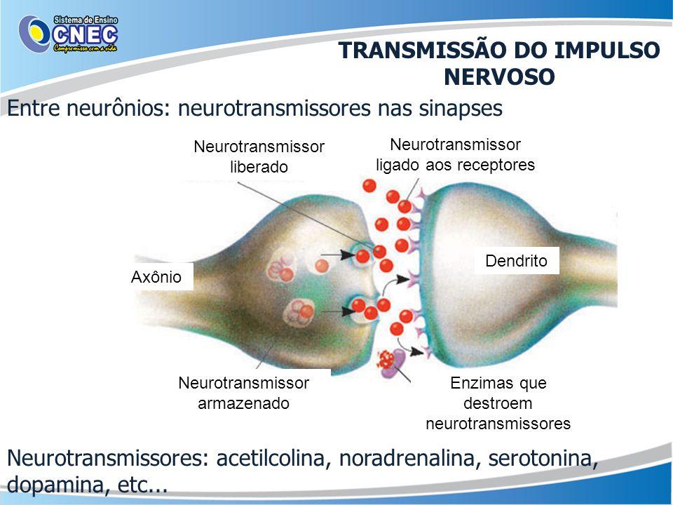 Entre neurônios: neurotransmissores nas sinapses Neurotransmissores: acetilcolina, noradrenalina, serotonina, dopamina, etc... Neurotransmissor libera