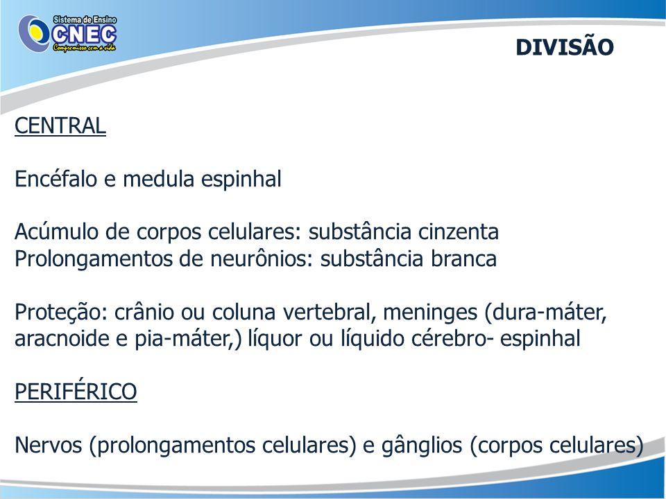 CENTRAL Encéfalo e medula espinhal Acúmulo de corpos celulares: substância cinzenta Prolongamentos de neurônios: substância branca Proteção: crânio ou coluna vertebral, meninges (dura-máter, aracnoide e pia-máter,) líquor ou líquido cérebro- espinhal PERIFÉRICO Nervos (prolongamentos celulares) e gânglios (corpos celulares) DIVISÃO