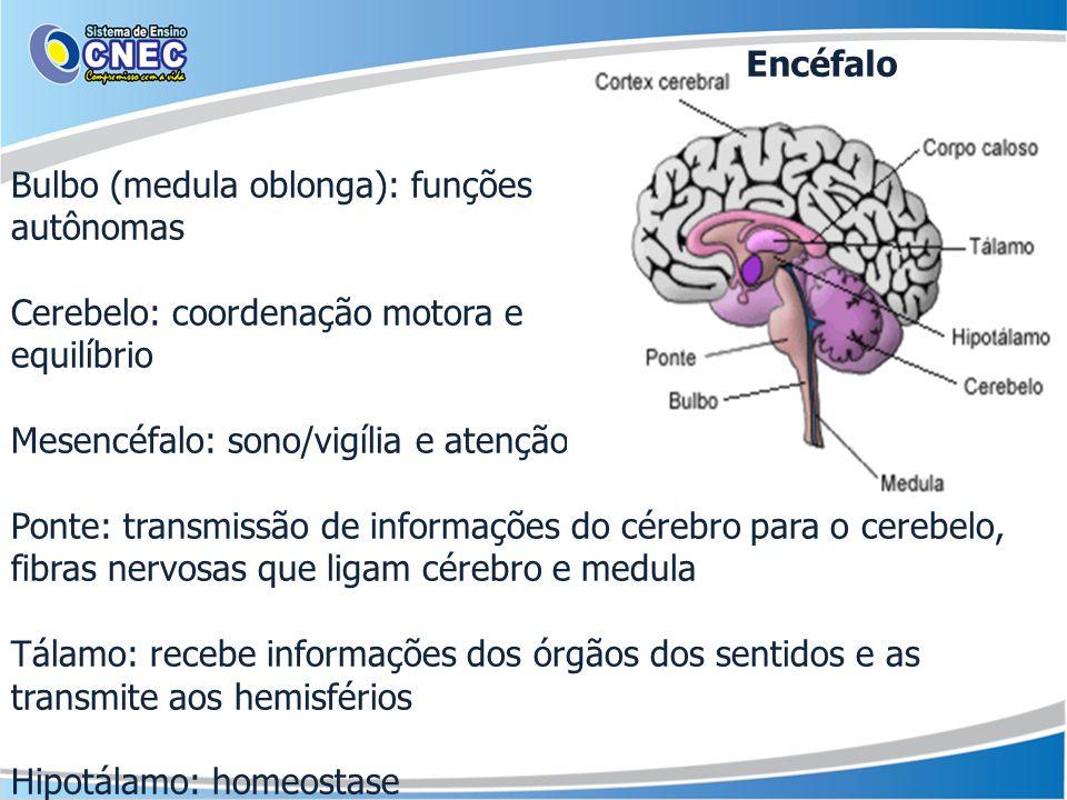 Bulbo (medula oblonga): funções autônomas Cerebelo: coordenação motora e equilíbrio Mesencéfalo: sono/vigília e atenção Ponte: transmissão de informações do cérebro para o cerebelo, fibras nervosas que ligam cérebro e medula Tálamo: recebe informações dos órgãos dos sentidos e as transmite aos hemisférios Hipotálamo: homeostase Encéfalo