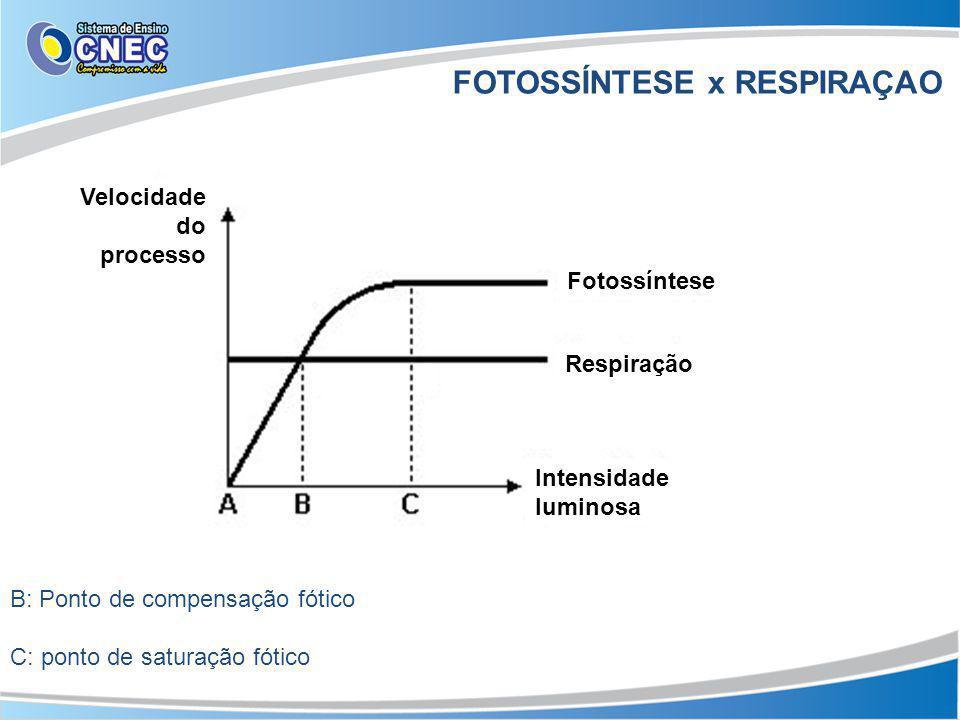 FOTOSSÍNTESE x RESPIRAÇAO Velocidade do processo Fotossíntese Respiração Intensidade luminosa B: Ponto de compensação fótico C: ponto de saturação fótico