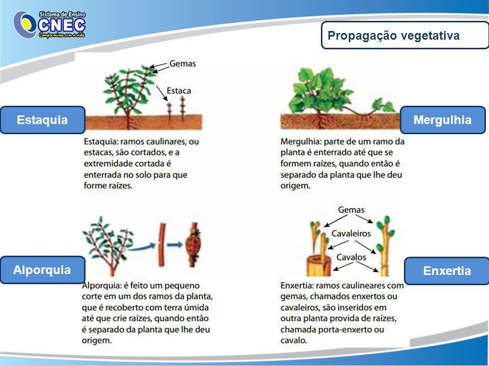 Propagação vegetativa EstaquiaMergulhia Alporquia Enxertia