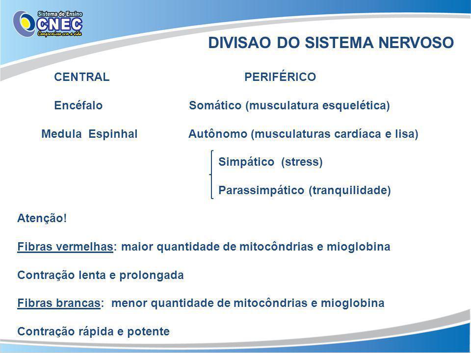 DIVISAO DO SISTEMA NERVOSO CENTRAL PERIFÉRICO Encéfalo Somático (musculatura esquelética) Medula Espinhal Autônomo (musculaturas cardíaca e lisa) Simpático (stress) Parassimpático (tranquilidade) Atenção.