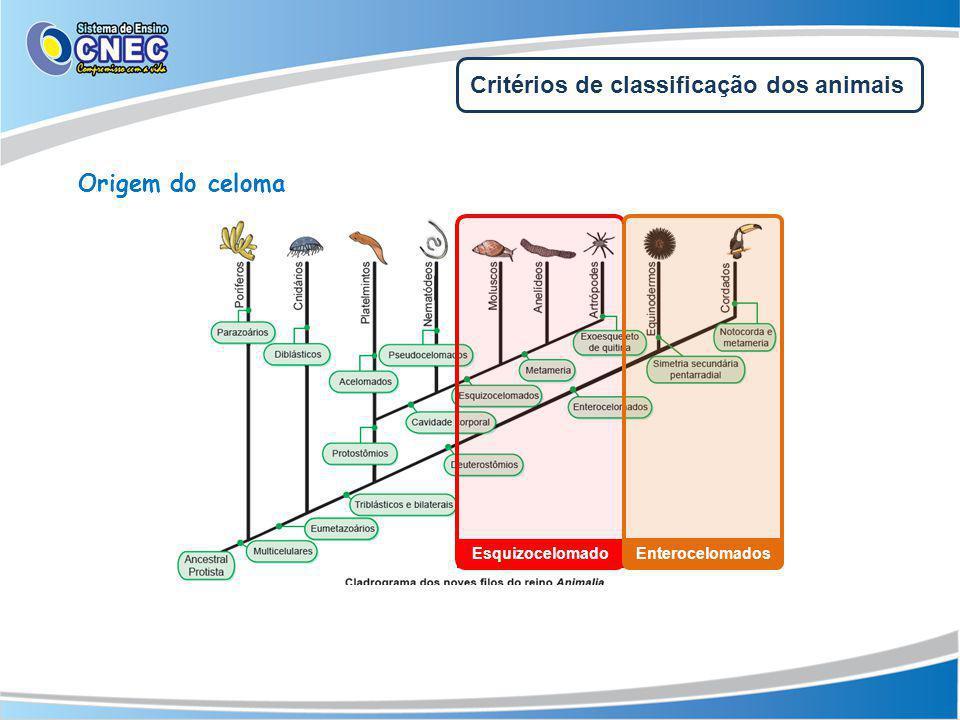 Esquizocelomado Enterocelomados Critérios de classificação dos animais Origem do celoma