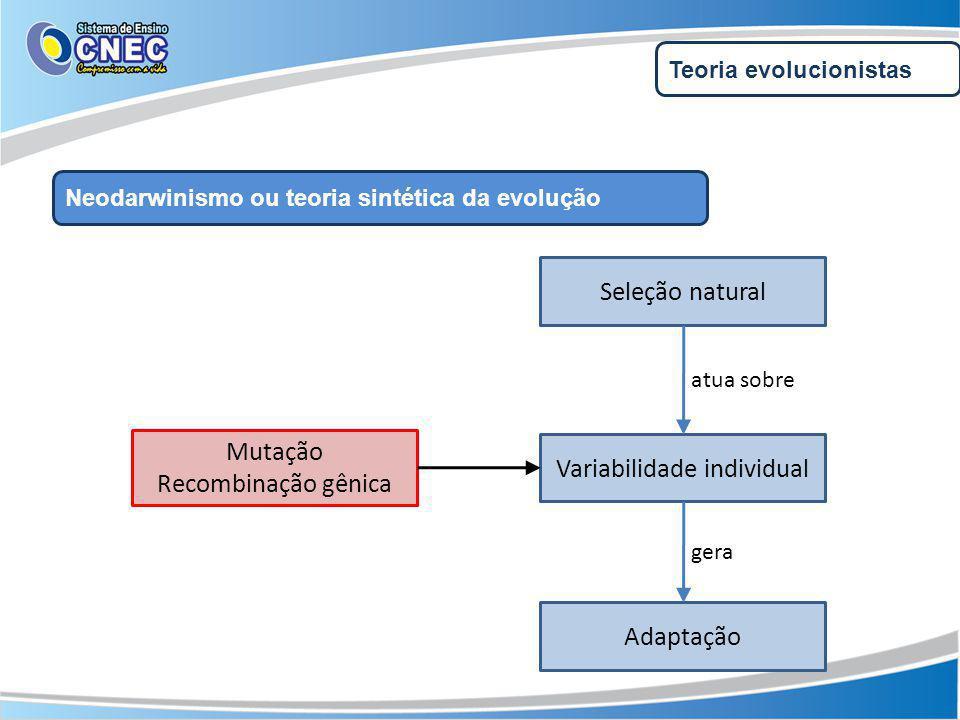 Teoria evolucionistas Neodarwinismo ou teoria sintética da evolução Variabilidade individual Seleção natural Adaptação atua sobre gera Mutação Recombinação gênica