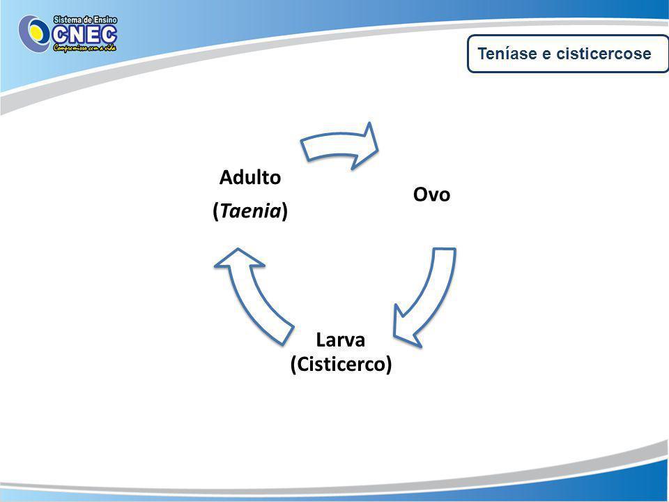 Teníase e cisticercose Ovo Larva (Cisticerco) Adulto (Taenia)