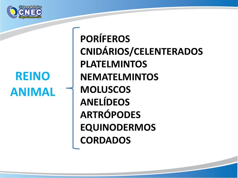 PORÍFEROS CNIDÁRIOS/CELENTERADOS PLATELMINTOS NEMATELMINTOS MOLUSCOS ANELÍDEOS ARTRÓPODES EQUINODERMOS CORDADOS REINO ANIMAL