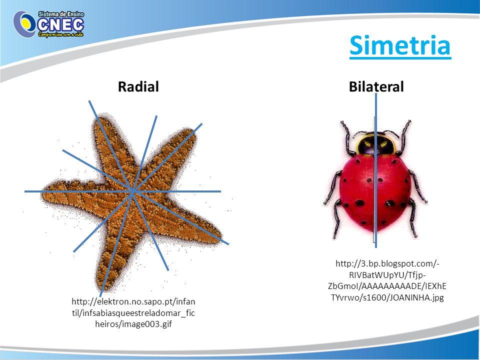 Simetria http://elektron.no.sapo.pt/infan til/infsabiasqueestreladomar_fic heiros/image003.gif http://3.bp.blogspot.com/- RIVBatWUpYU/Tfjp- ZbGmoI/AAA