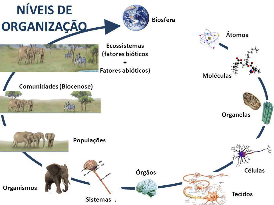 NÍVEIS DE ORGANIZAÇÃO Átomos Organelas Células Tecidos Organismos Biosfera Órgãos Ecossistemas (fatores bióticos + Fatores abióticos) Comunidades (Biocenose) Populações Moléculas Sistemas