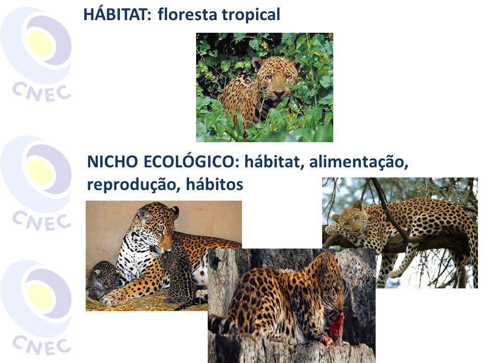 HÁBITAT: floresta tropical NICHO ECOLÓGICO: hábitat, alimentação, reprodução, hábitos