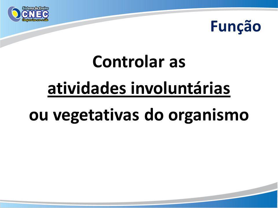 Função Controlar as atividades involuntárias ou vegetativas do organismo