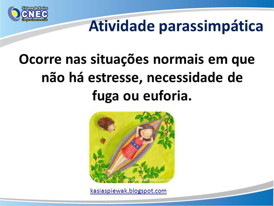 Atividade parassimpática Ocorre nas situações normais em que não há estresse, necessidade de fuga ou euforia. kasiaspiewak.blogspot.com