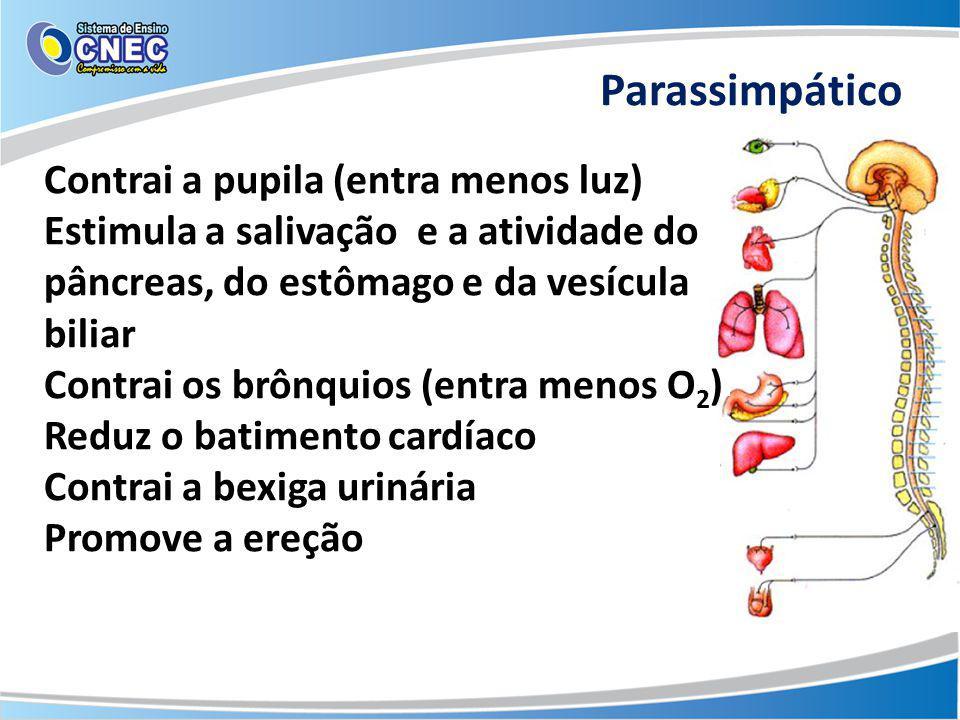 Parassimpático Contrai a pupila (entra menos luz) Estimula a salivação e a atividade do pâncreas, do estômago e da vesícula biliar Contrai os brônquio